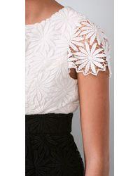 Shoshanna Black Lace Sheath Dress