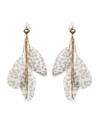 Jane Norman Natural Leopard Print Feather Earrings