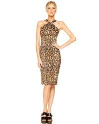 Michael Kors Multicolor Jaguar-print Twisted Halter Dress