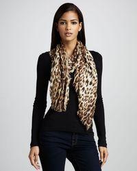 Roberto Cavalli | Animal Leopardprint Stole | Lyst