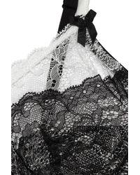Mimi Holliday by Damaris Black Éclair Lace Underwired Bra