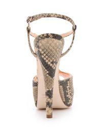 Giuseppe Zanotti - Gray Monro T Strap Sandals - Lyst