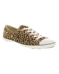 Converse Brown Ct Lite Ox Leopard Smu