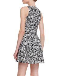Tibi - Black Leopardprint Fitflare Knit Dress - Lyst