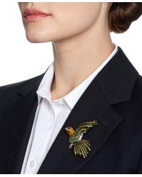 Brooks Brothers | Green Audubon Parrot Brooch | Lyst