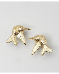 Joanna Laura Constantine - Metallic Gold Hummingbird Stud Earrings - Lyst