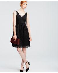 Ann Taylor - Black Petite Lace Flare Dress - Lyst