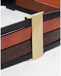 ASOS - Multicolor Color Blocked Snake Metal Bar Detail Waist Belt - Lyst