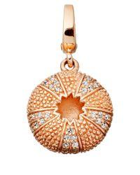Astley Clarke Pink Rose Gold Vermeil Sea Urchin Aphrodisiac Charm