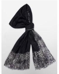 Calvin Klein - Black White Label Leopard Border Lightweight Scarf - Lyst