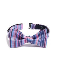 Ted Baker - Blue Stripe Silk Bow Tie for Men - Lyst