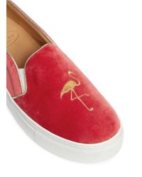 Bing Xu Orange 'tribeca' Flamingo Embroidery Velvet Skate Slip-ons