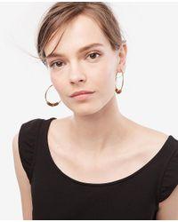Ann Taylor - Multicolor Statement Hoop Earrings - Lyst