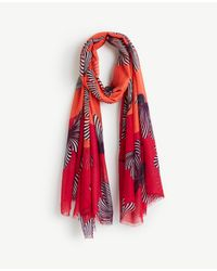 Ann Taylor Red Floral Scarf