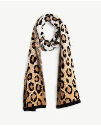Ann Taylor - Black Cheetah Blanket Scarf - Lyst