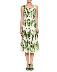 Dolce & Gabbana - Green Cotton Poplin Peapod Print Dress - Lyst