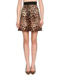 Dolce & Gabbana Multicolor Jewel-embellished Leopard-print Shantung Skirt