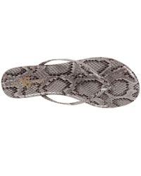 Yosi Samra - Multicolor Roee Snake Leather Flip Flop - Lyst