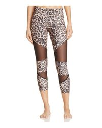 Onzie | Multicolor Leopard And Mesh Capri Leggings | Lyst