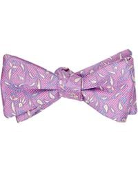 Penrose London - Pink Manor.b Bow Tie for Men - Lyst