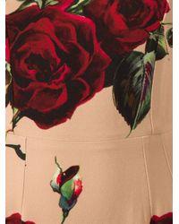 Dolce & Gabbana Brown Rose Trumpet Dress