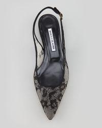 Manolo Blahnik Lestina Lace Slingback Flat Black