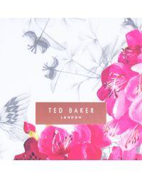 Ted Baker Gray Felica Babylon Iphone 6/6s/7/8 Clip Case