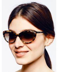 Kate Spade | Brown Livia 2 Sunglasses | Lyst