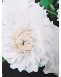 Adam Lippes White Dahlia Dress