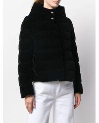 Herno スタンドカラーパデッドジャケット Black