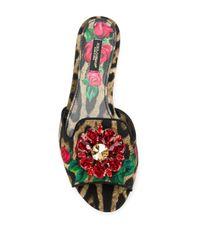 Dolce & Gabbana Brown Verzierte Pantoletten