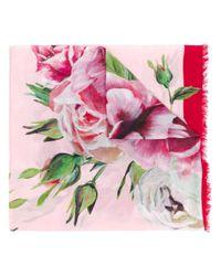 Dolce & Gabbana Pink Peony-print Scarf