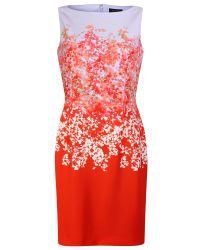 Tahari White Floral Print Shift Dress