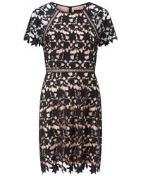 Adrianna Papell - Black Ava Lace Trimmed A-line Dress - Lyst