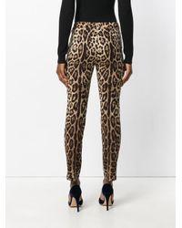 Dolce & Gabbana Multicolor Leopard-print Stretch-silk Tapered Trousers