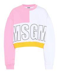 Felpa cropped in cotone di MSGM in Pink