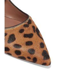 Tabitha Simmons Brown Hermione Leopard-print Calf Hair Point-toe Flats