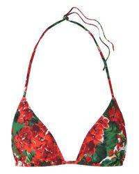 Dolce & Gabbana Red Triangel-bikini-oberteil Mit Blumenprint