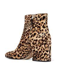Sam Edelman Brown Taye Leopard-print Calf Hair Ankle Boots