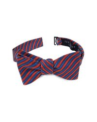 Ted Baker | Blue Stripe Silk Bow Tie for Men | Lyst