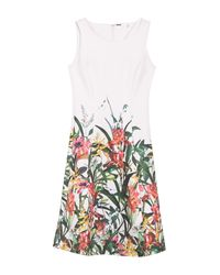 T Tahari Multicolor Fit & Flare Floral Print Dress