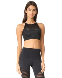 Onzie | Black Mesh Crop Bra Top | Lyst