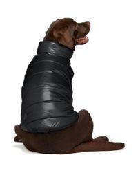 Blouson isole pour chien noir edition Poldo Dog Couture Moncler Genius en coloris Black