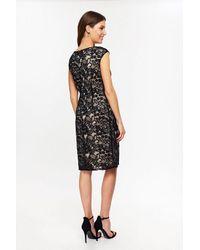 Wallis Black Constrast Lace Shift Dress