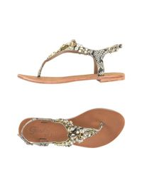 Gardini Brown Toe Post Sandal