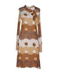 Nolita Brown Knee-length Dress