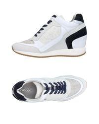 Geox Gray High-tops & Sneakers