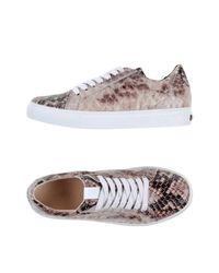 Kennel & Schmenger Brown Low-tops & Sneakers