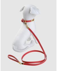 DSquared² | Red Harness & Leash Set | Lyst