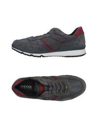Geox Gray Low-tops & Sneakers for men